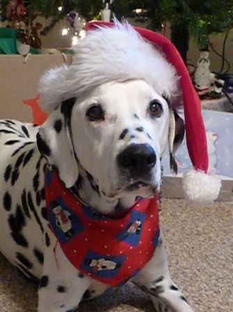 08dec-lucky-in-santa-hat-84-compressed