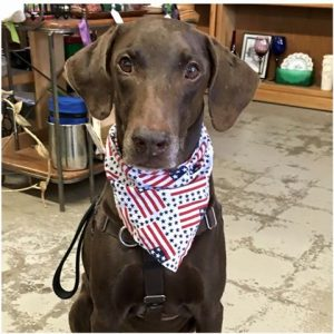 riley-begging-flag-bandana-jul2016