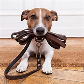 image-dog-leash-walking