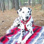 lucky - favorite on blanket stone mounatin
