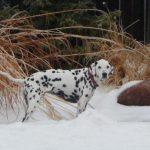 lucky - lincoln - backyard snow 2009