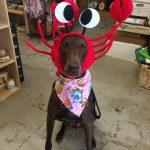 riley-lobster-hat-june2014