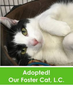image-foster-cat-lc-adopted