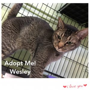 PAWS - foster Wesley mar2017