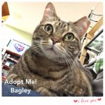 paws - foster bagley mar2017 on lap
