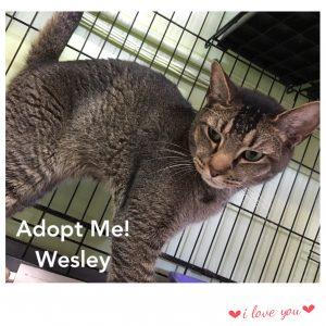 Adopt Wesley!
