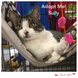 Adopt Sully!