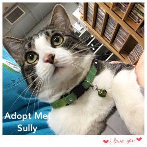 Adopt Sully!