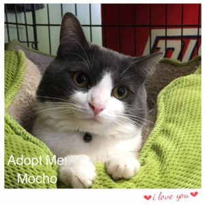 Adopt Mocho!