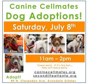 Dog Adoptions!