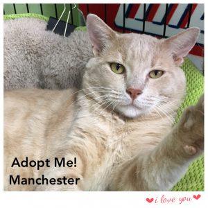 Adopt Manchester!