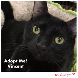 Adopt Vincent!