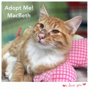 Adopt Macbeth!