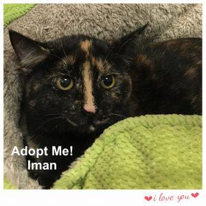 Adopt Iman!