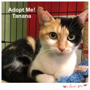 Adopt Tanana!