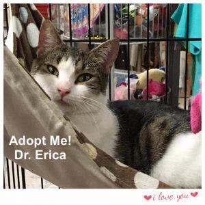 Adopt Dr. Erica!