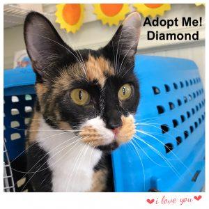 Adopt Diamond!