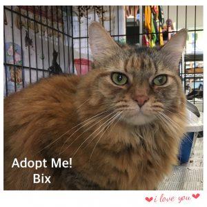 Adopt Bix!