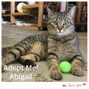 Adopt Abigail!