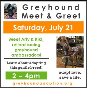 Meet Greyhounds!