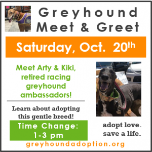 Meet Greyhounds!