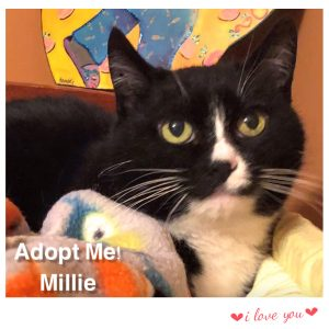 Adopt Millie!