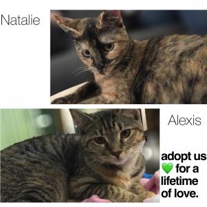 Adopt Sisters!