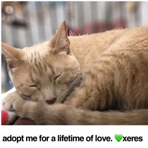 Adopt Xeres!