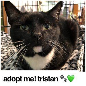 Adopt Tristan!