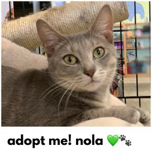 Adopt Nola!