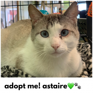 Adopt Astaire!