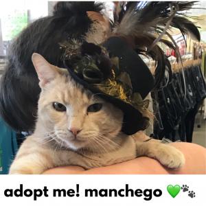 Adopt Manchego!