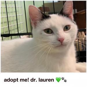 Adopt Dr. Lauren!