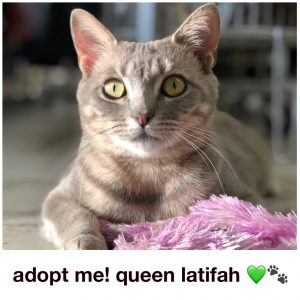 Adopt Queen Latifah