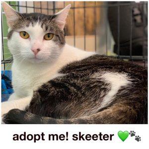 Adopt Skeeter