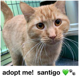 Adopt Santigo!