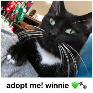 Adopt Winnie!
