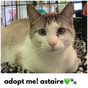 Adopt Astaire