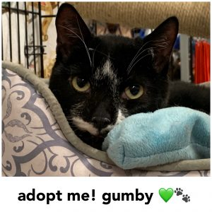 Adopt Gumby